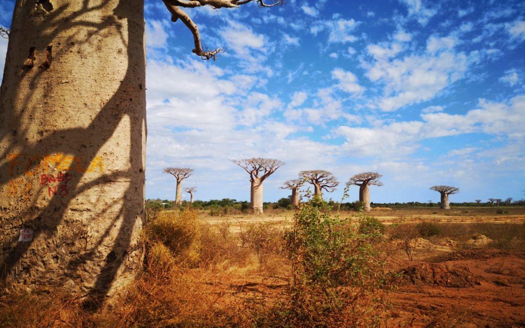Madagascar : la ruée vers l'ouest