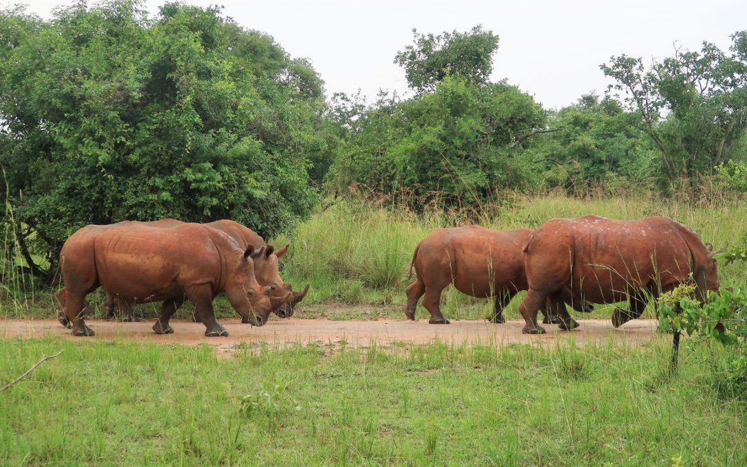Ouganda, la perle de l'Afrique !